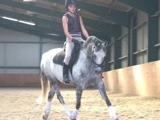 Looking for dressage pony  full loan lwvtb