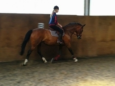 PRICE REDUCED- Proven Showjumping broodmare