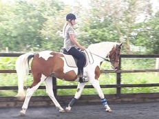 16.2 tb mare 8 years old £6000 inc tack and rugs