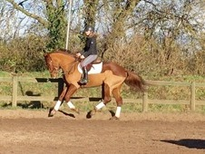 Fantastic eventing/dressage potential