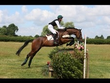 Potential top class working hunter prospect / eventer 7 year old ...