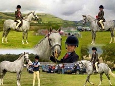 True Mothers Dream! ! ! 12. 2 Pony Club Winner! ! A Real All Rounder