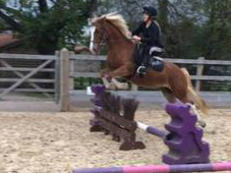 STUNNING *BOMBPROOF* Welsh D Mare
