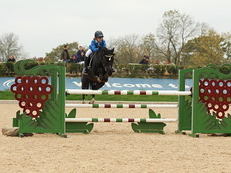 138 JUMPING PONY FOR SALE!