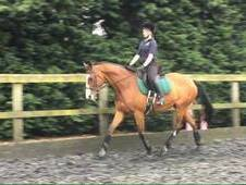 For full Loan, LWVB or possible sale 16. 2hh TB mare
