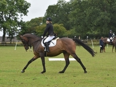 Stunning Dressage / eventing ROR Prospect
