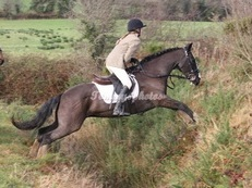 SAFE HUNTER ALL ROUNDER KIND MARE