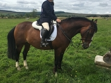 Millie 14, 2 11 years old competition pony