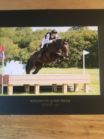 16.2hh Stunning Eventer