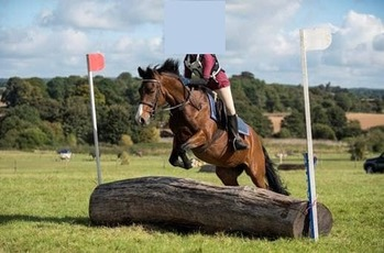 FOR SALE - Katie – 10 year old 13.3hh New Forest Mare