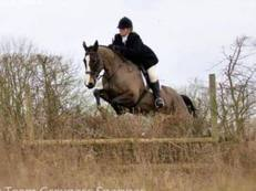 100% Easy Irish Hunter, Pleasure Ride & Nanny to Lead-rein