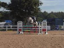 Fantastic Fun Jumping horse.