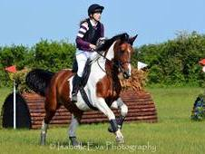 Stunning Middle Weight Tri Coloured Mare. True all rounder for SJ...