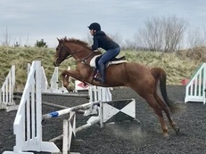 Semi-Project Horse - Needs bringing on further
