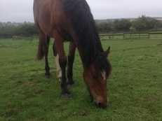 Handsome Yearling Gelding