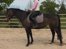 fun allround mare
