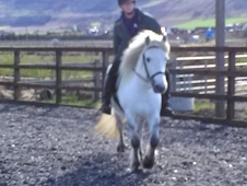 Highland Mare for Loan