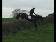 Top hunt horse / proven allrounder