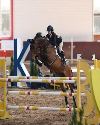 Superb Young Riders 1.30m horse with scope for Grand Prixs