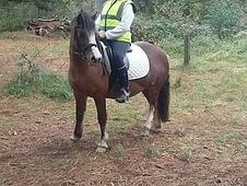 Lead rein pony 6years old 12hh