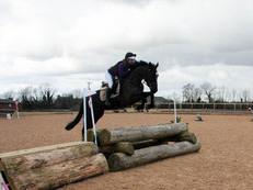 Stunning and  talented 16.1hh ISH mare