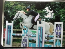 Excellent 14. 2 jumping pony