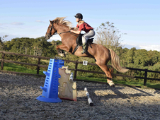 PART LOAN: 15hh NF/TB mix Mare