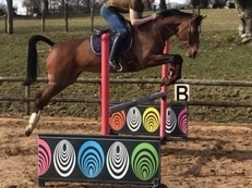 *Stunning KWPN mare for sale*