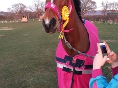 Sweet Natured PC Competition Horse