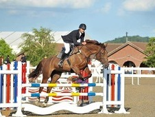 Perfect Family All Rounder/Competition Horse