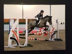 Schoolmaster show jumping/event pony