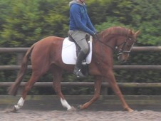 Smart Homebred 4yo Allrounder