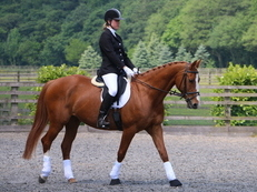 Flashy 15.3hh Chestnut Mare 11yrs
