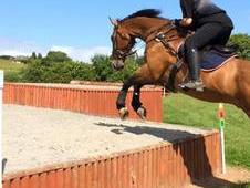 16. 2hh Schoolmaster Competition Horse