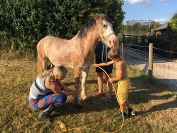 Loving and kind strawberry roan 3 year old