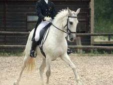 Advanced dressage horse