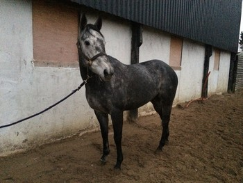 STUNNING GREY FOR SALE!!