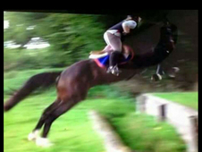 Quality 15. 2 warmblood gelding 9yo darco and gudiam lines out of...