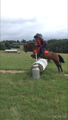 Eye catching New Forest mare for loan!