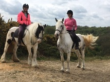 Epsom, Surrey 2 very safe horses/cobs for share