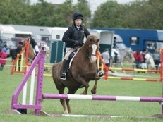 Lovely Welsh Section B Pony in need of a good home!