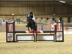 Fun 14.1 New Forest Hunting, Jumping, Competition Pony