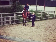 Showjumper/perfect young rider horse