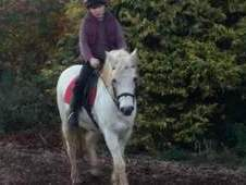 Tiny Tim (Timmy) 12. 2 hh Welsh type pony