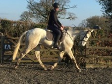 Looking for s sharer for stunning16. 2hh gelding