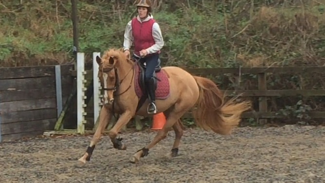 Stunning ISH mare with potential