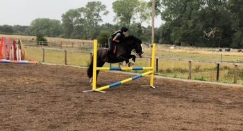 Stunning 14.2hh Working Hunter/ PC Prospect