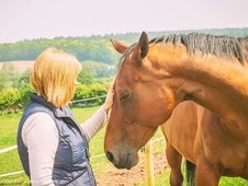Equine Reiki & Natural Health Staffordshire