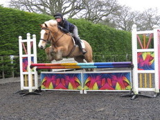 SUPER PONY CLUB/RIDING CLUB COB