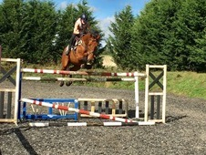 Seriously talented show jumping horse - ready for competitive rid...